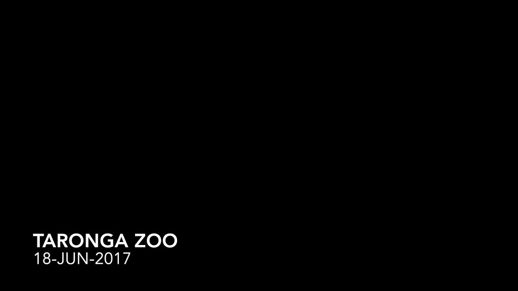 Taronga-Zoo.mp4
